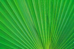 Hoja verde en Tenerife Planta hermosa Foto de archivo libre de regalías