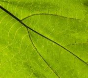Hoja verde en un árbol contra el sol Imagen de archivo