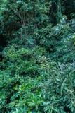 Hoja verde en un pantano completo el lugar del agua verde esmeralda imagenes de archivo