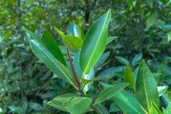 Hoja verde en un pantano completo el lugar del agua verde esmeralda fotografía de archivo libre de regalías