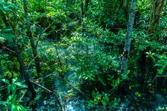 Hoja verde en un pantano completo el lugar del agua verde esmeralda foto de archivo libre de regalías