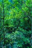 hoja verde en un pantano completo imágenes de archivo libres de regalías