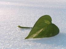 Hoja verde en una nieve. Fotografía de archivo libre de regalías