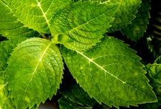 Hoja verde fresca Foto de archivo libre de regalías