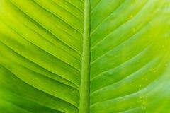 Hoja verde fresca como fondo Fotografía de archivo
