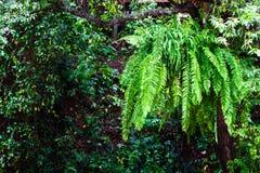 Hoja verde fresca del helecho Imágenes de archivo libres de regalías