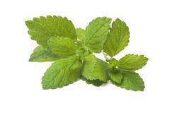 Hoja verde fresca del toronjil. Bálsamo de limón Imagen de archivo