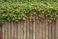 Hoja verde fresca en el fondo de madera del marco Imágenes de archivo libres de regalías