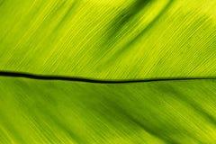 Hoja verde grande abstracta Imágenes de archivo libres de regalías