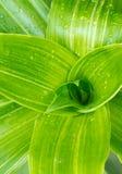 Hoja verde hermosa Fotografía de archivo libre de regalías