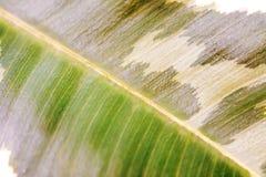 Hoja verde joven 5 Fotos de archivo