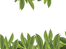 Hoja verde para el marco con la trayectoria de recortes Foto de archivo libre de regalías