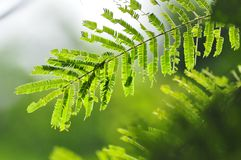 hoja verde por mañana ligera Fotos de archivo