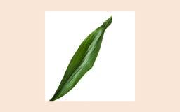 Hoja verde sobre marco del cuadrado del gimoteo en beige Imagen de archivo libre de regalías