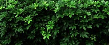 Hoja verde tropical Imagenes de archivo