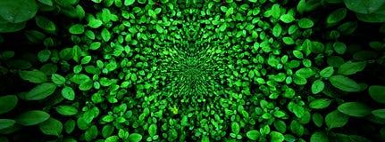 Hoja verde tropical, contraste imagen de archivo