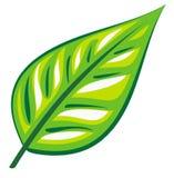 Hoja verde (vector) Imagen de archivo libre de regalías