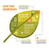 Hoja verde - Vector el concepto de Infographic con los iconos Imagen de archivo