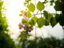 Hoja verde y flor rosada con el fondo borroso imagenes de archivo