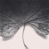 Hoja vieja blanco y negro Imagenes de archivo