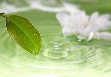 Hoja y agua Imágenes de archivo libres de regalías