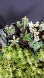 Hoja y cactus verde y mini planta Imagen de archivo