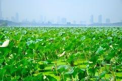 Hoja y ciudad de Lotus Foto de archivo