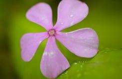 Hoja y flor Imagen de archivo libre de regalías