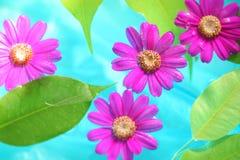 Hoja y flor frescas en agua de la pureza imagen de archivo libre de regalías
