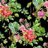Hoja y flores, modelo inconsútil de la pintura de la acuarela en fondo oscuro Foto de archivo libre de regalías