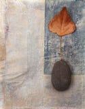 Hoja y fondo de la piedra Imagen de archivo
