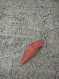hoja y fondo rojos Imagen de archivo