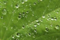 Hoja y gotas de agua Foto de archivo libre de regalías