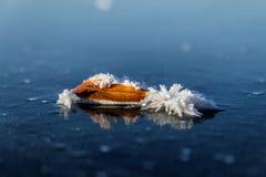Hoja y helada en el hielo azul Imágenes de archivo libres de regalías