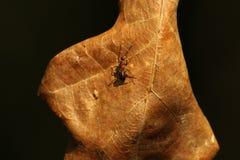 Hoja y hormiga Imágenes de archivo libres de regalías