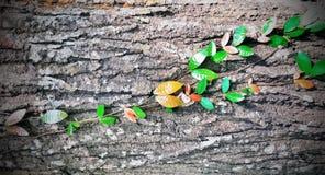 Hoja y madera Foto de archivo libre de regalías