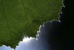 Hoja y Sun Imagen de archivo libre de regalías