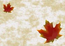 Hojas Imagen de archivo libre de regalías