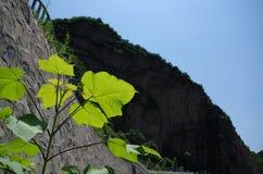 Hojas Imagenes de archivo