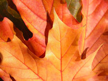hojas Imagen de archivo