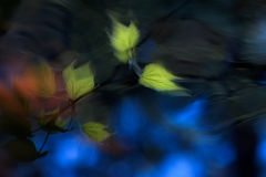Hojas abstractas Foto de archivo
