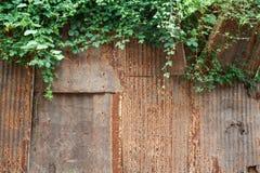 Hojas aherrumbradas de la textura y del verde Imagen de archivo libre de regalías
