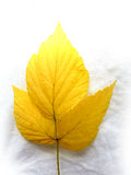 Hojas amarillas Fotos de archivo