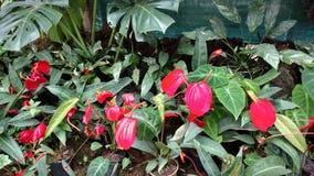 Hojas amarillas de la hoja del jardín de la flor Fotografía de archivo libre de regalías