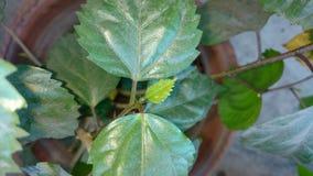 Hojas amarillas de la hoja del jardín de la flor Imagen de archivo libre de regalías