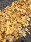 Hojas amarillas de oro en el pavimento imagen de archivo