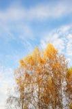 Hojas amarillas del árbol de abedul en fondo del cielo Fotografía de archivo libre de regalías