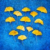 Hojas amarillas del ginkgo en fondo azul Fotografía de archivo libre de regalías