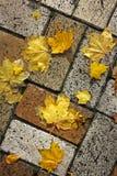 Hojas amarillas en la teja Fondo fotografía de archivo libre de regalías