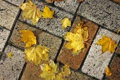 Hojas amarillas en la teja Fondo imagen de archivo